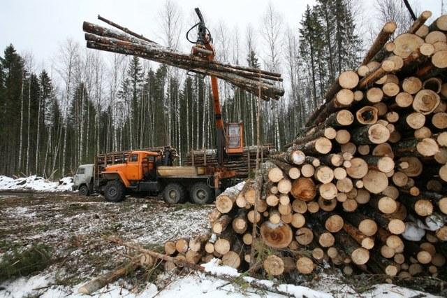 Как и где выписать лес